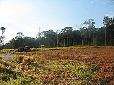 Meio Ambiente - Queimada e desmatamento - Desmatamento - Área desmatada sendo preparada para lavoura