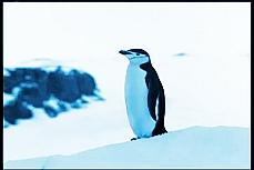 Brasil Antártica