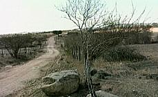 Caatinga seca