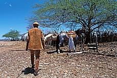 Meio Ambiente - Clima -  Seca - Vaqueiro na Caatinga