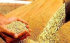 Agropecuária - Plantações - Safra na agricultura