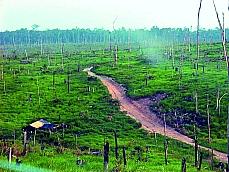Meio Ambiente - Queimada e desmatamento - Dematamento