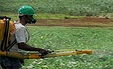 Agropecuária - Agrotóxico CH 29/08/11