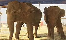 Meio ambiente - Animais e natureza - Elefantes