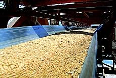 Agropecuária - Plantações - Soja