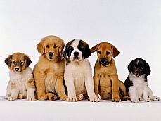 Meio ambiente - Animais e natureza - Cachorros