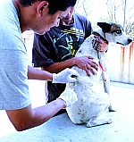 Meio  ambiente - Animais e natureza - Animal - Cachorro - Vacinação contra leishmaniose