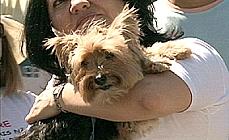 Animais - Cachorro
