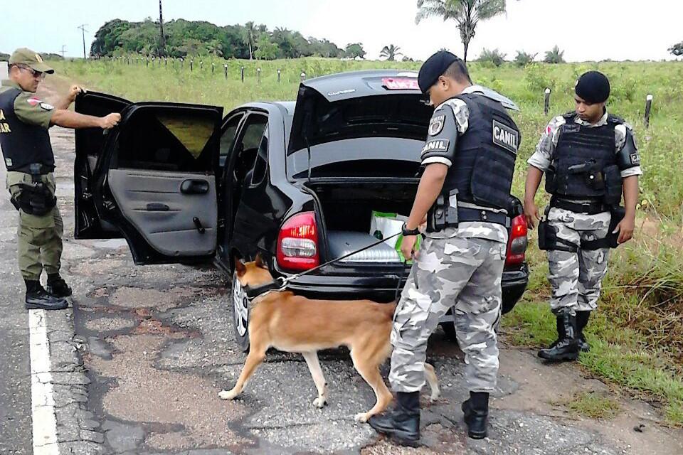Segurança - drogas - abordagem policial cão farejador blitz tráfico rodovias
