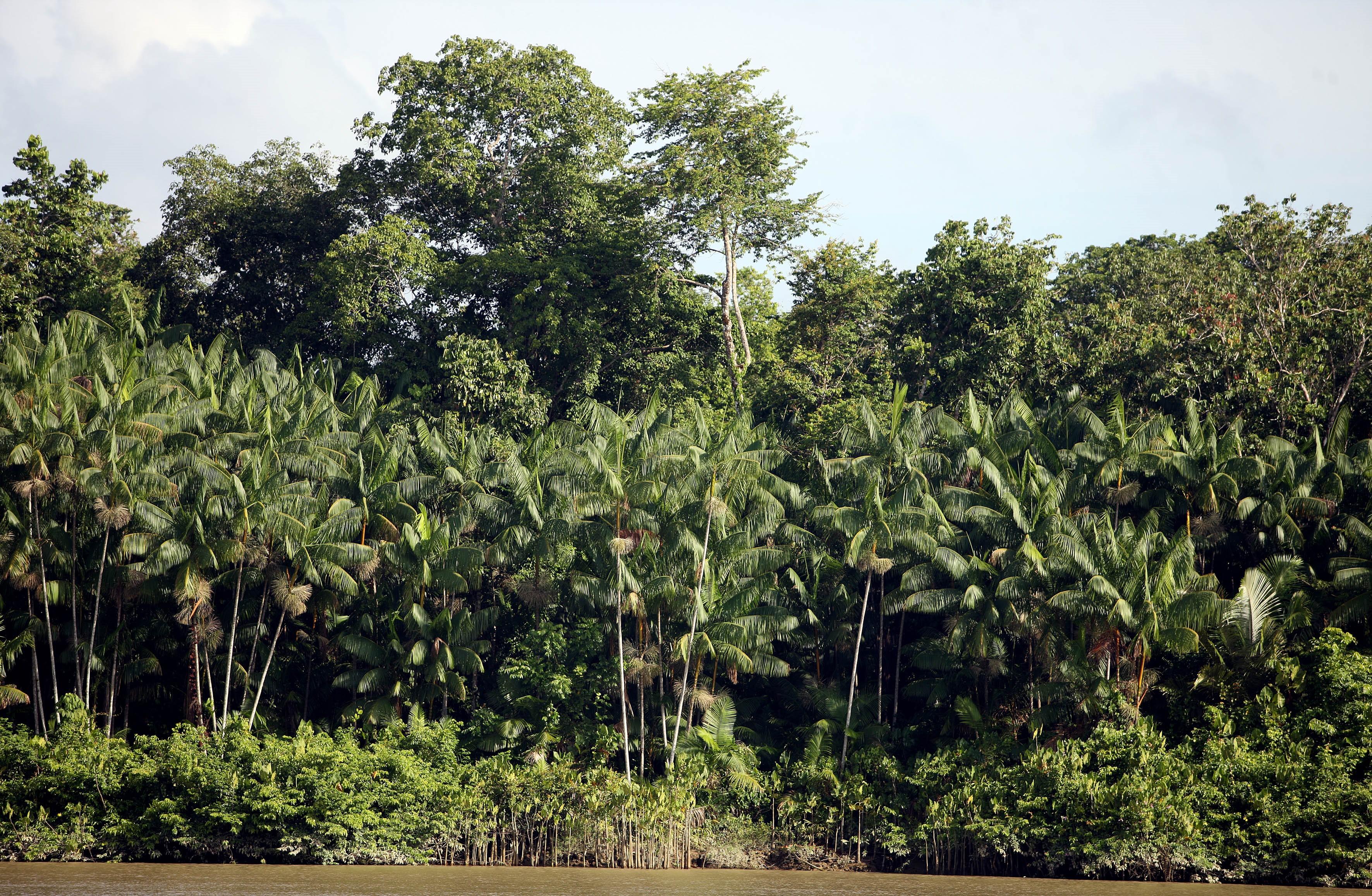 Meio Ambiente - Parques e Florestas - mata vegetação flora florestal árvores