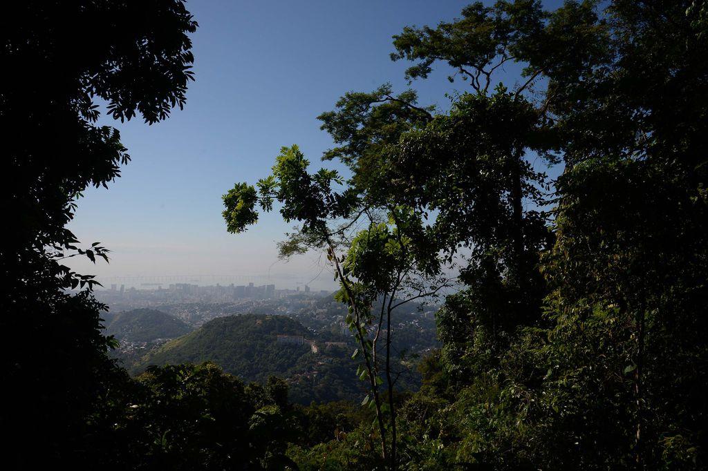 Meio Ambiente - parques e florestas - Código Florestal vegetação flora árvores preservação ambiental