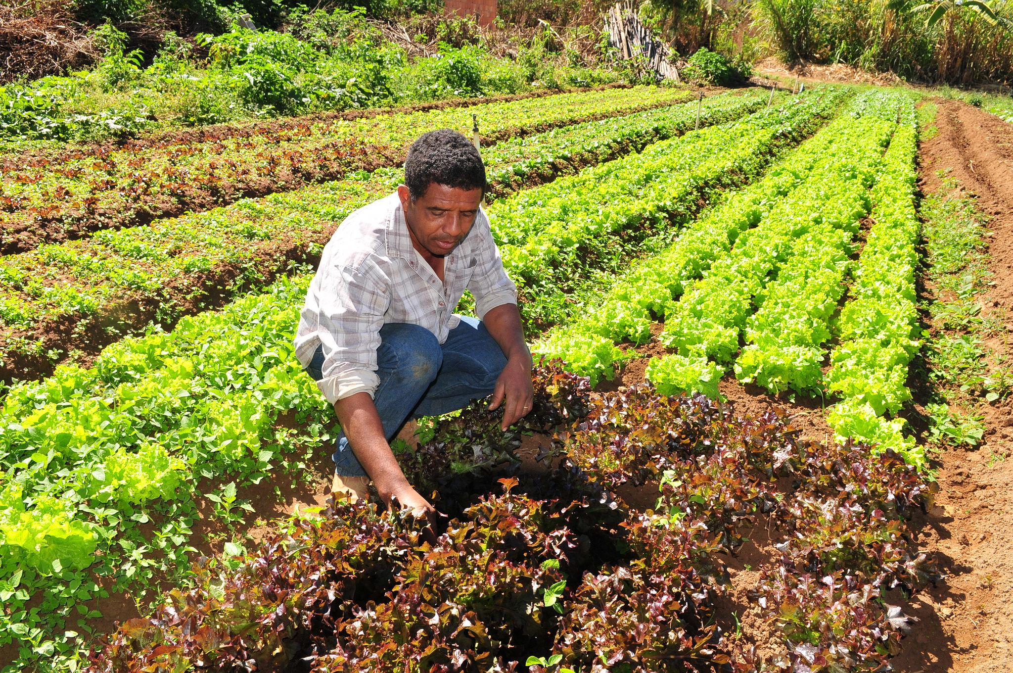 Agropecuária - plantações - agricultura familiar agricultor hortas