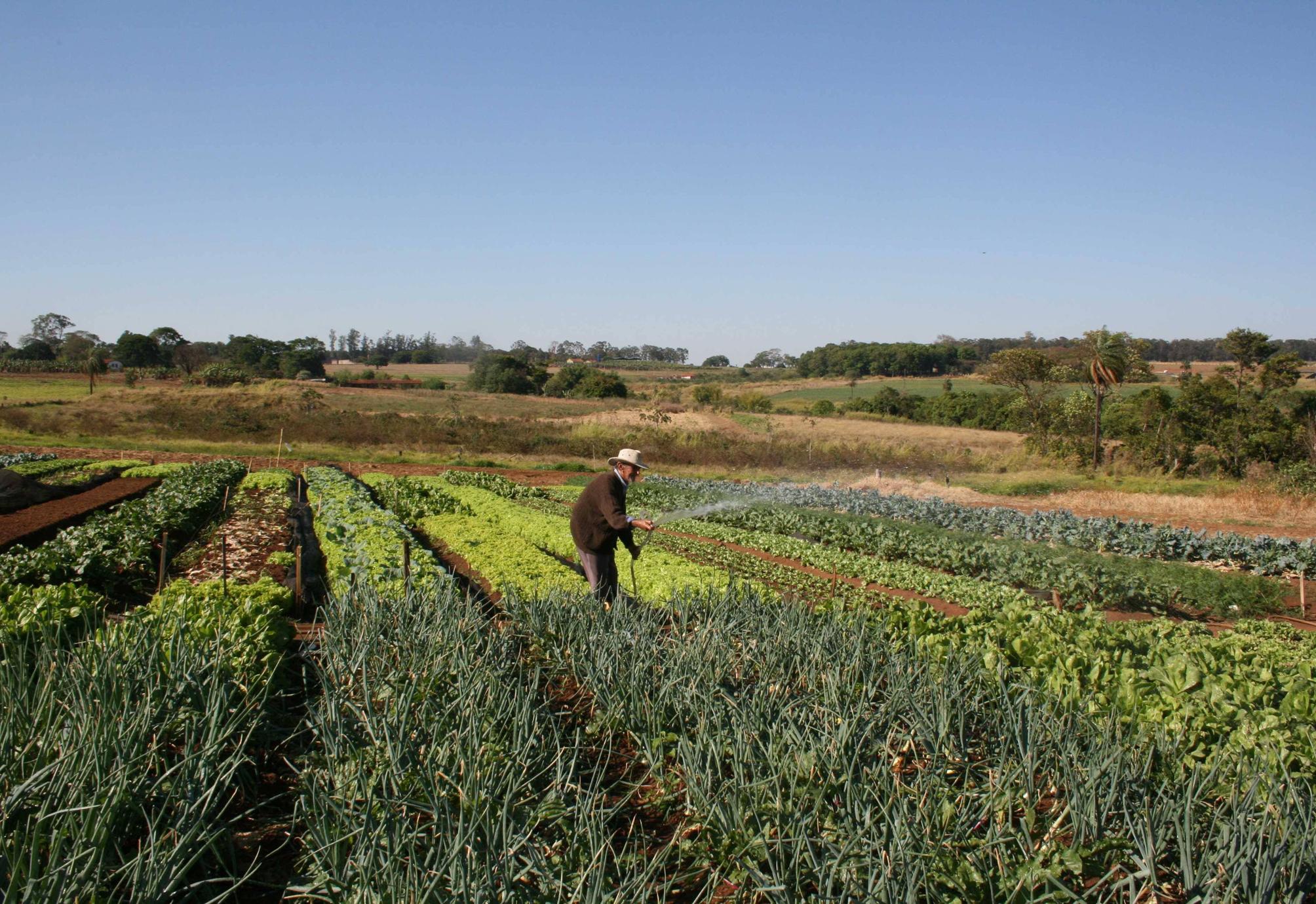 Agropecuária - plantações - hortas fazendas agricultura familiar irrigação pequenas propriedades