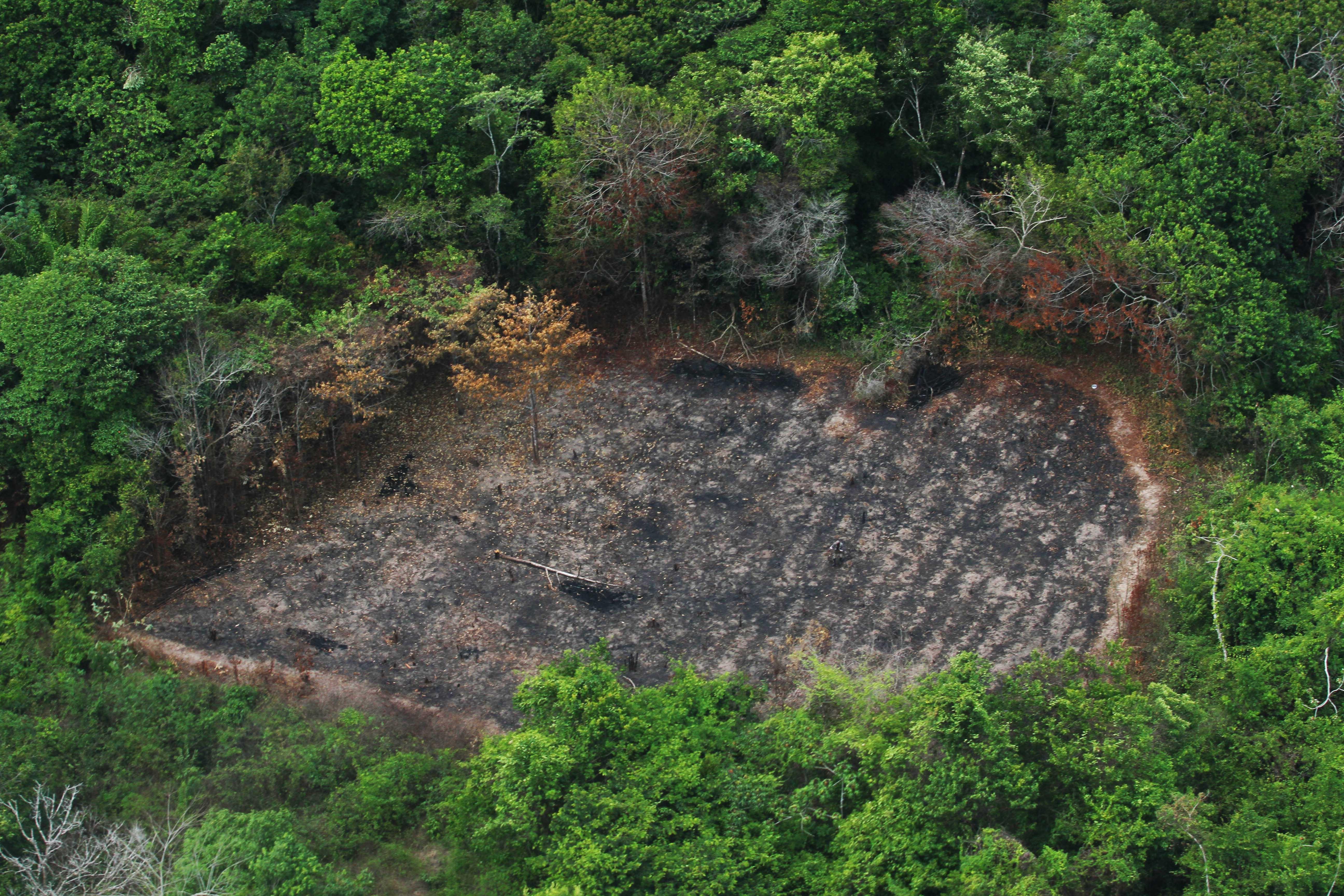 Meio Ambiente - queimada e desmatamento - deflorestamento madeiras derrubada árvores fiscalização clandestino Ibama Amazônia