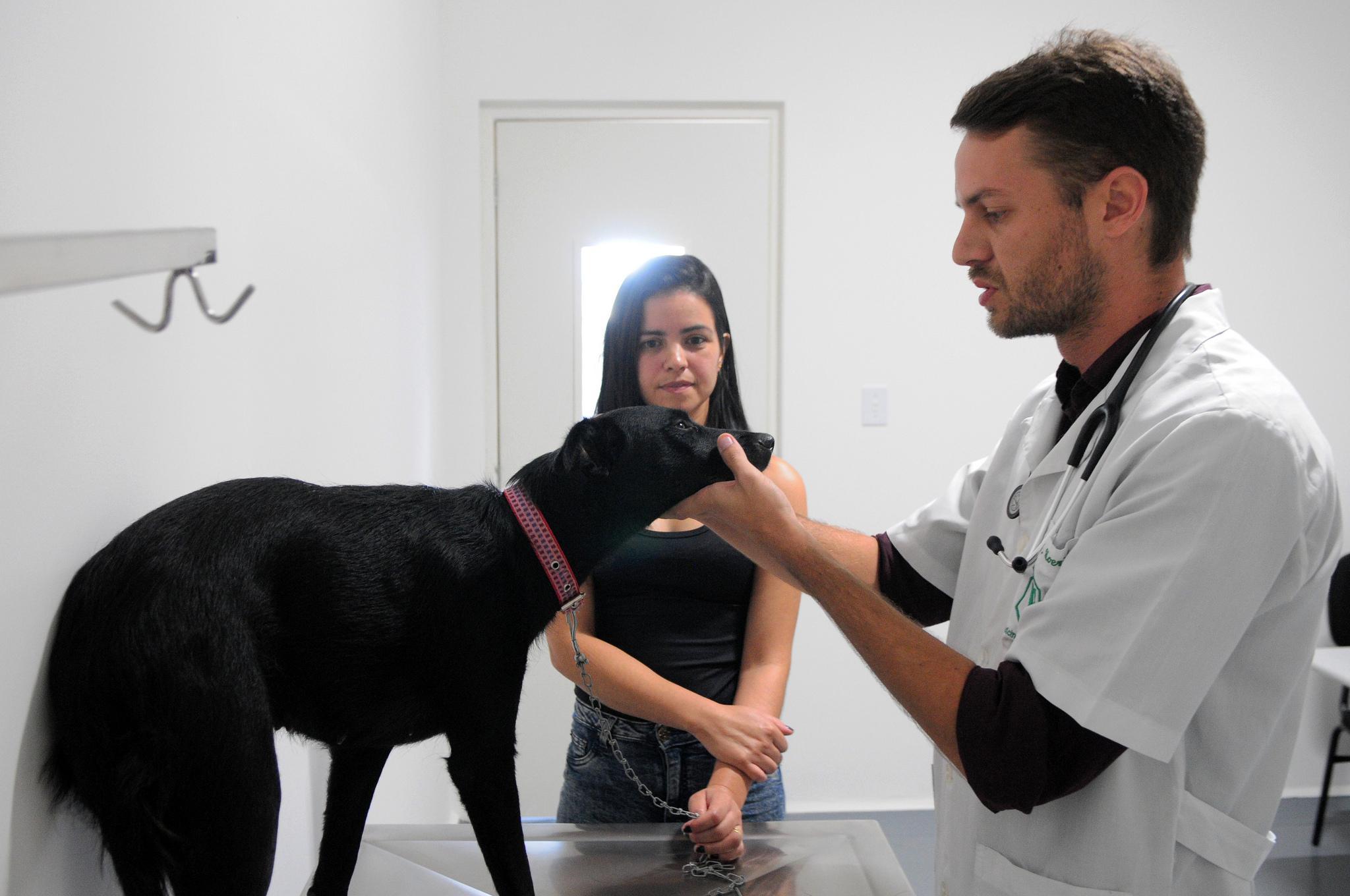 Meio Ambiente - animais e natureza - hospital veterinários pets saúde animal cachorros