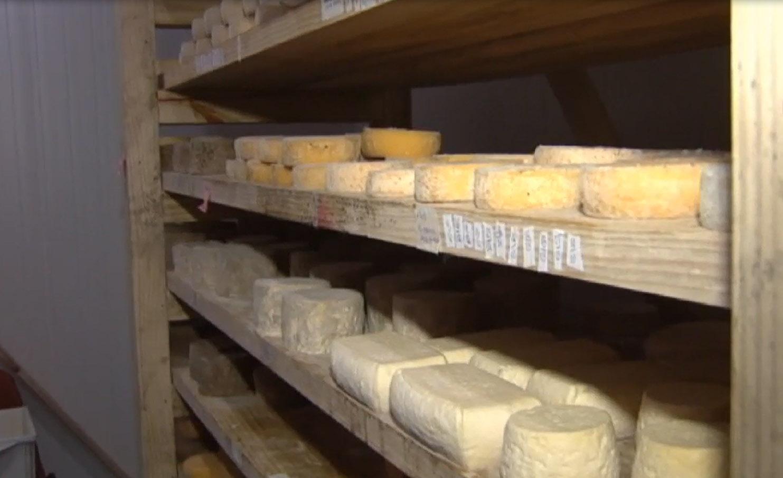 Alimentos - queijos artesanais produtor rural