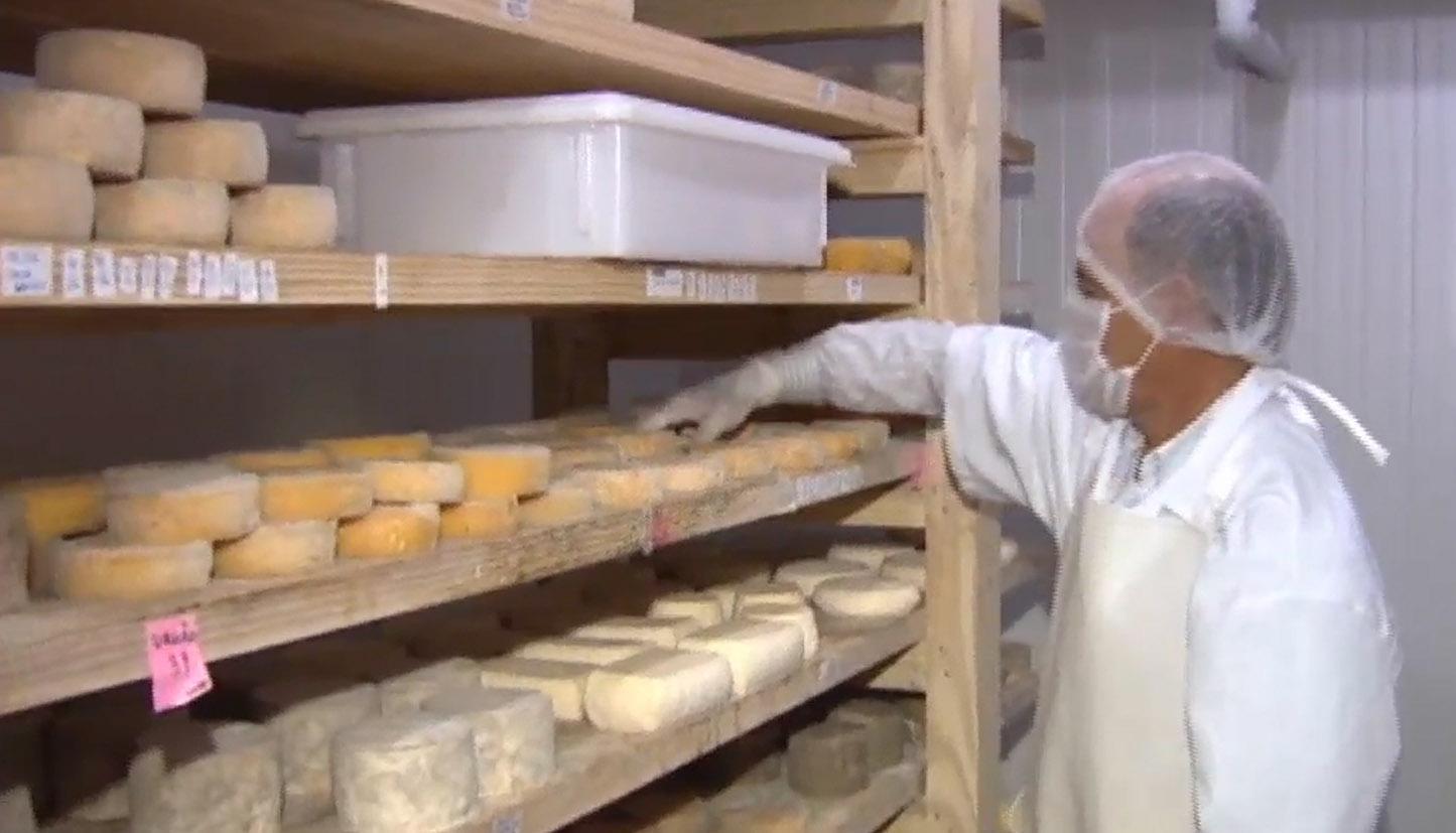 Agropecuária - geral - alimentos queijo artesanal produtores rurais agropecuária laticínios leite fazendas