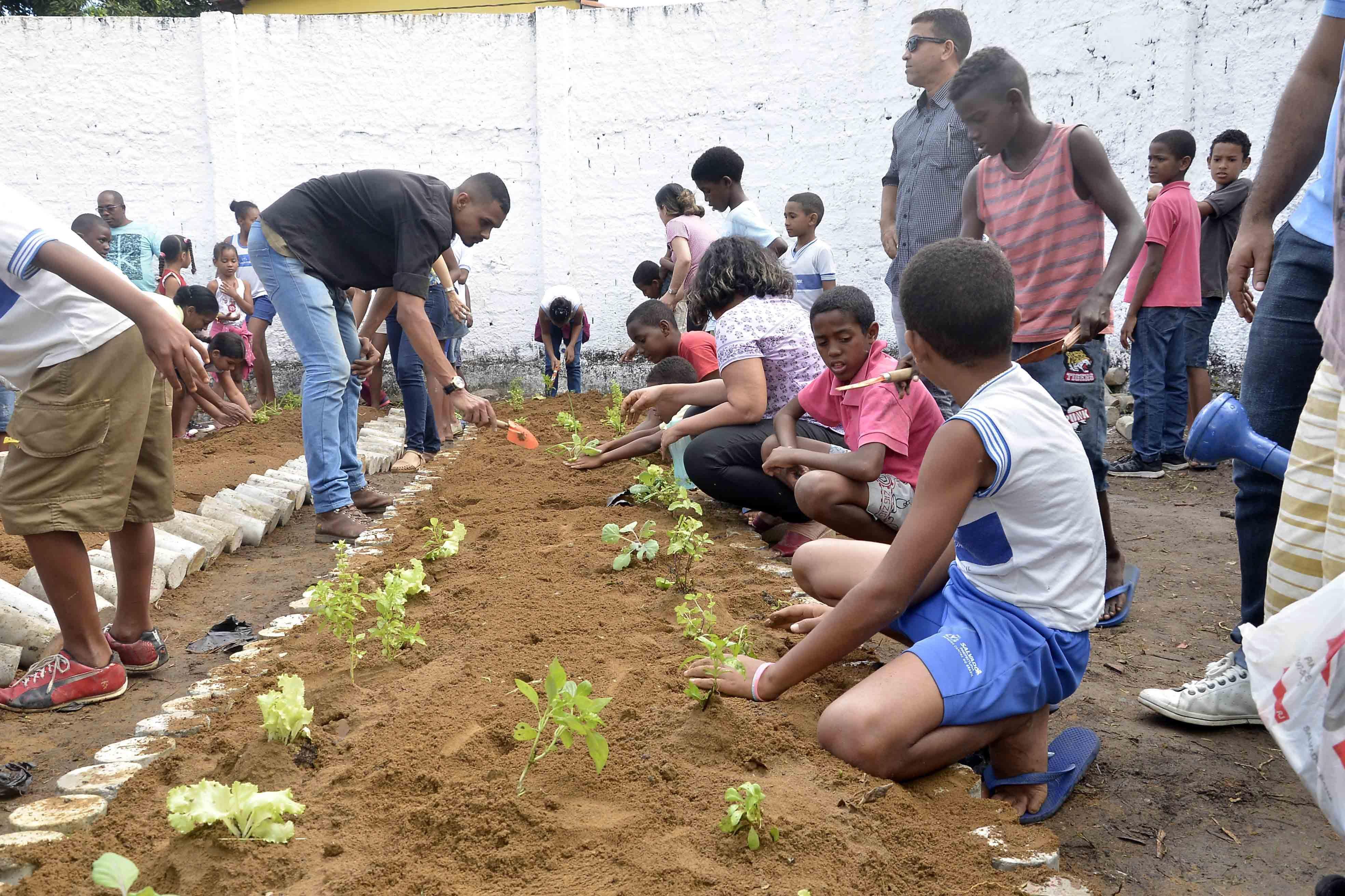Agropecuária - geral - hortas comunitárias