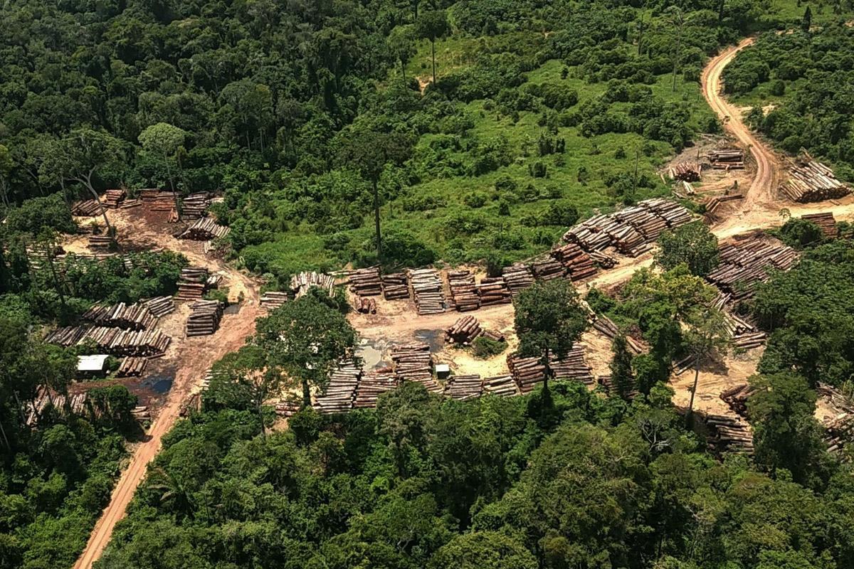 Meio Ambiente - queimada e desmatamento - destruição florestas matas