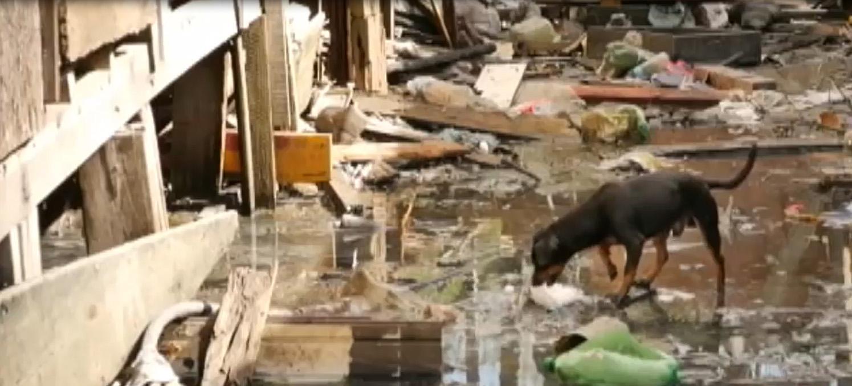 Cidades - favela e pobreza - saneamento básico esgotos animais cachorros