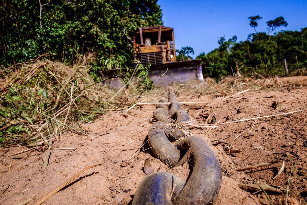 Meio Ambiente - queimada e desmatamento - Ibama fiscalização derrubada por correntes aquecimento global