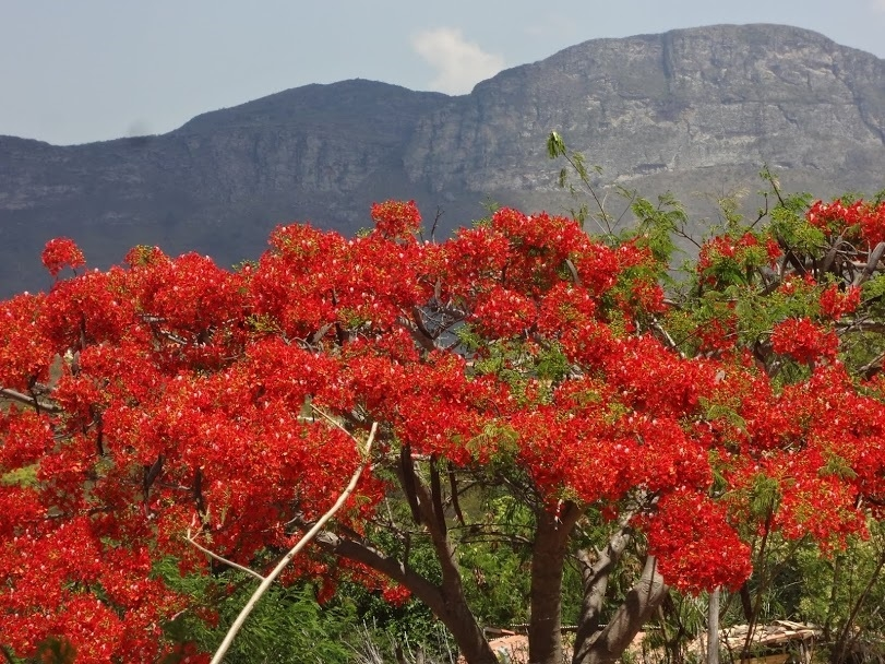 Samba da Minha Terra, 23/09/2018 - Guine, Chapada Diamantina (BA), flores, primavera, natureza, parques nacionais, parques ecológicos