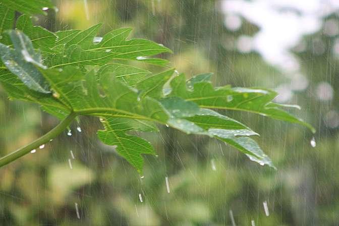 Chuva, Tempestade, Enchente, Clima, Frio, Molhado, Raio, Nuvem, mudanças climáticas