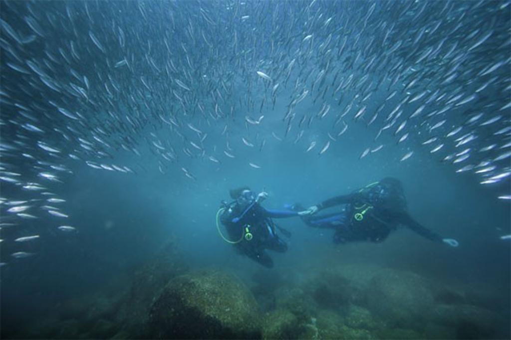 Meio Ambiente - água - oceanos mergulho mergulhador fundo do mar peixes vida marinha