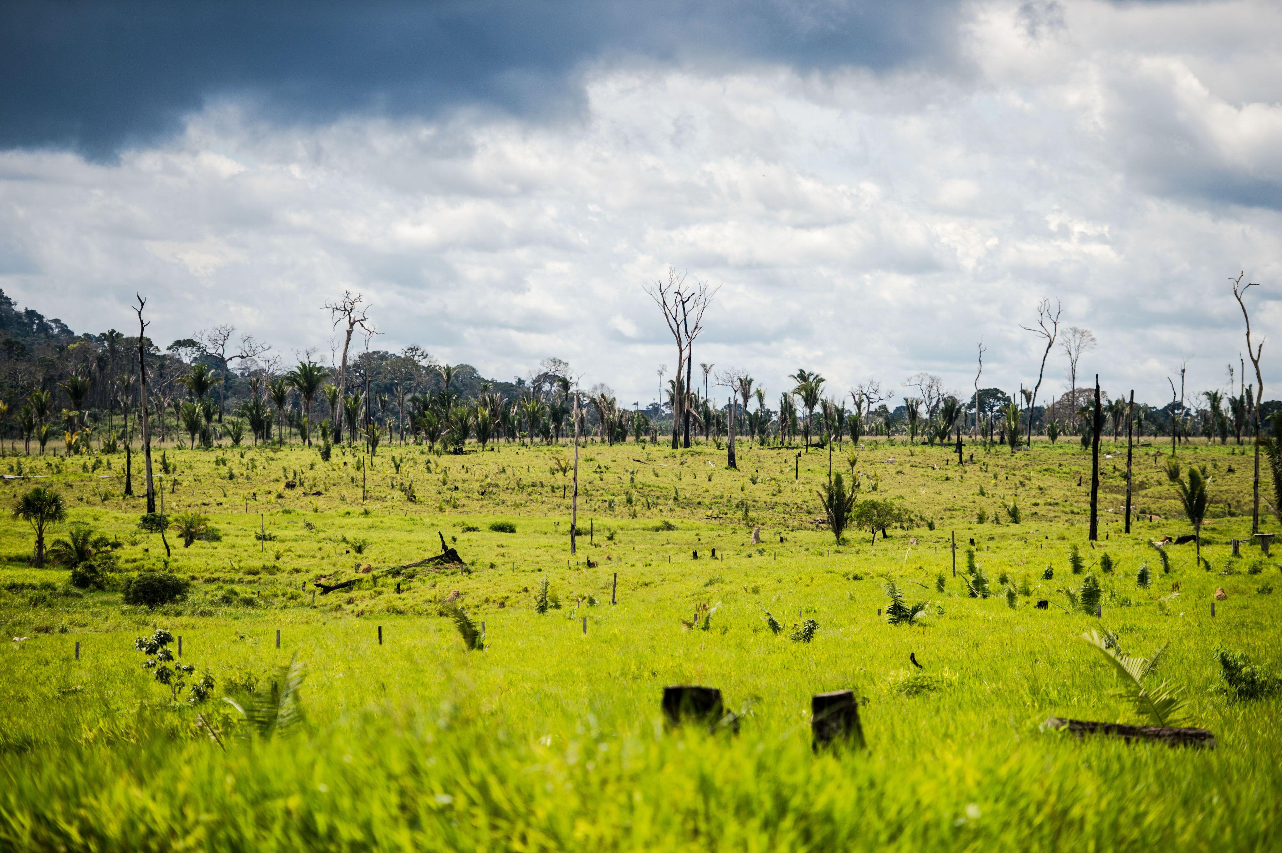 Meio Ambiente - queimada e desmatamento - derrubada árvores madeireira madeira ilegal