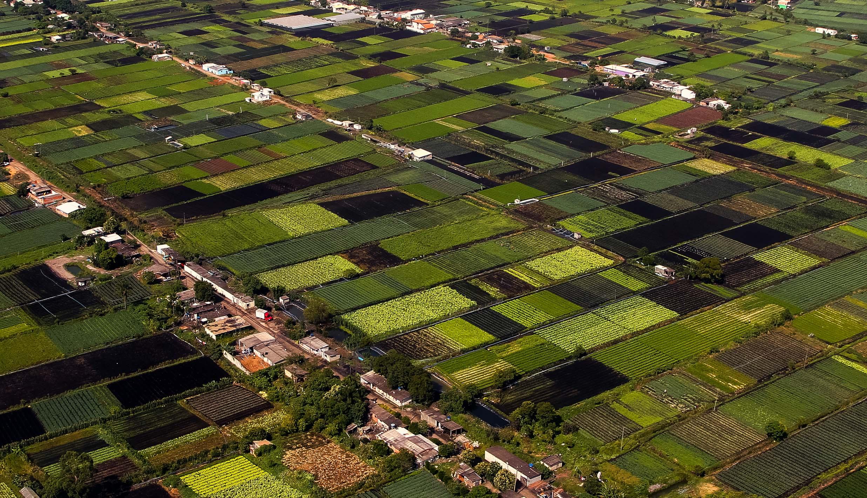 Agropecuária - plantações - agricultura pequenas propriedades cultivo agricultores