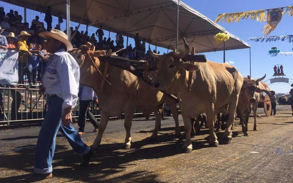 Romeiro desfila com carro de boi durante a Festa do Divino Pai Eterno