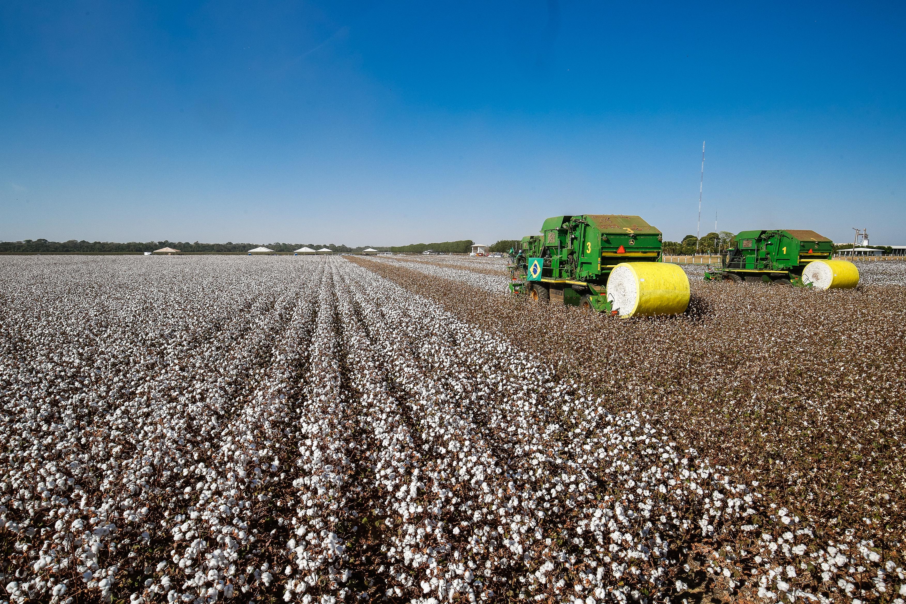 Agropecuária - plantações - agricultura algodão agricultor rural colheita