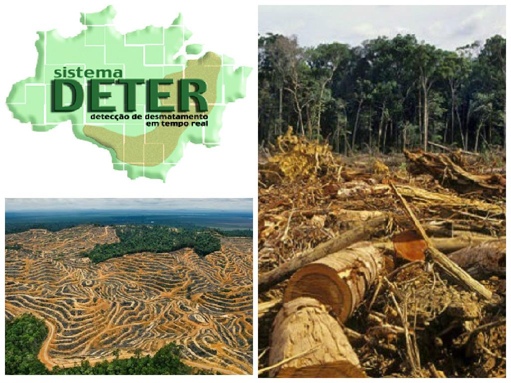 Desmatamento e Desenvolvimento na Amazônia