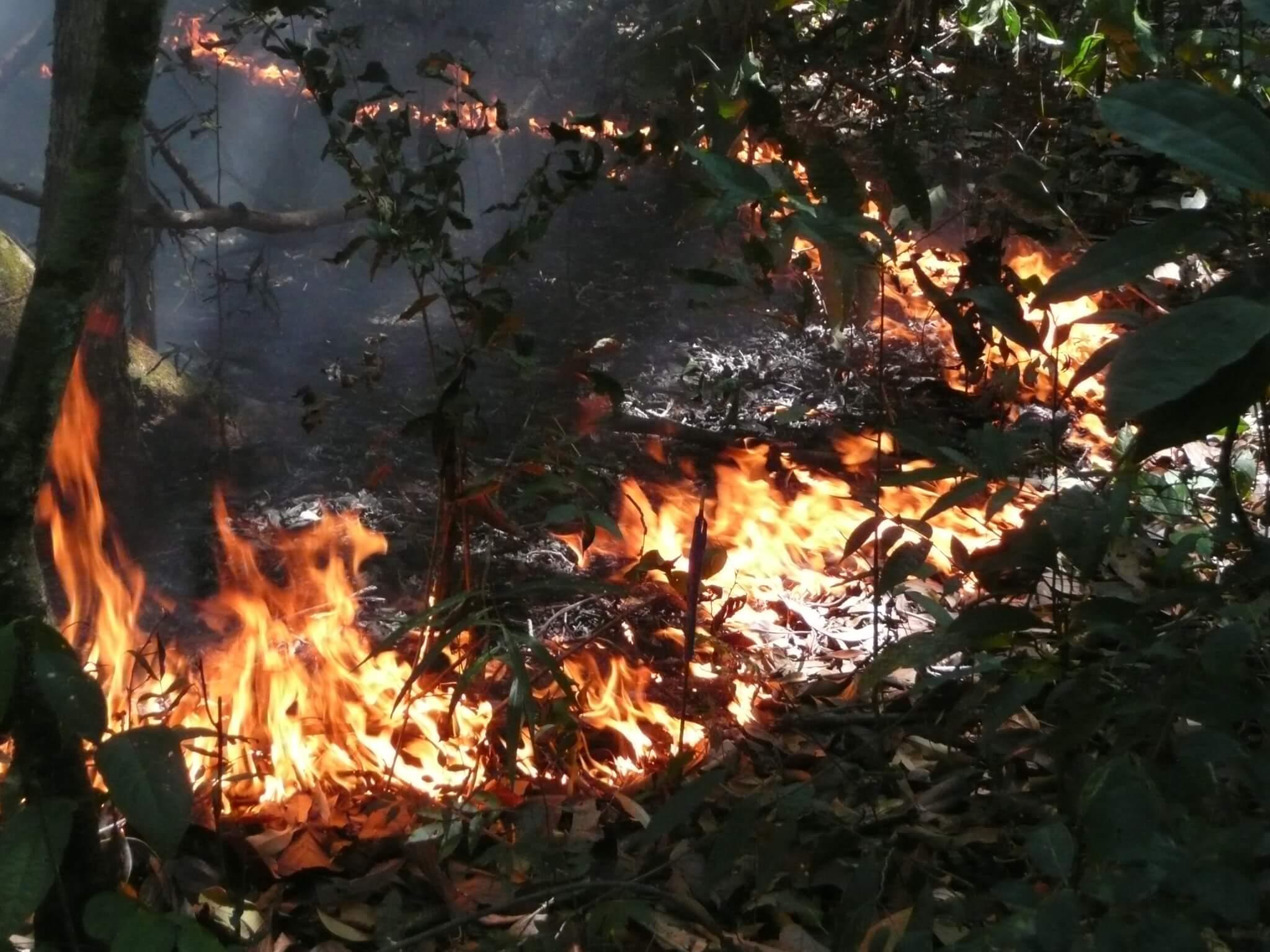 Recuperação florestal pós-queimadas