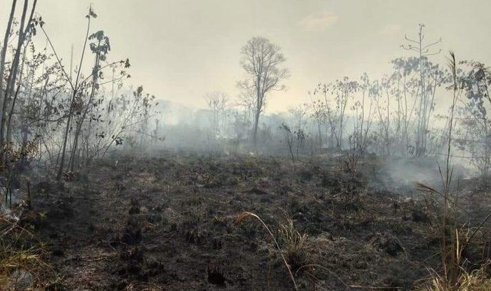 Resultado de imagem para Maia sugere que recursos de fundo da Petrobras sejam destinados à Amazônia