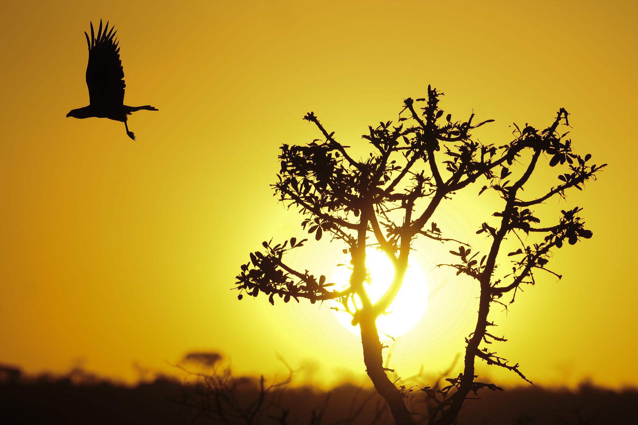 Desenvolvimento sustentável do Cerrado