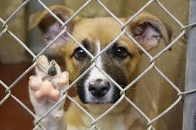 Maus-tratos a animais podem vir a ser punidos com pena de reclusão