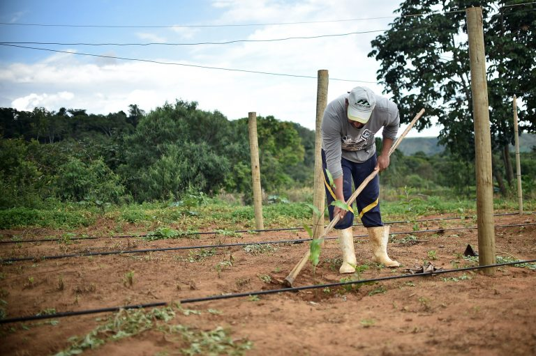 Agropecuária - plantações - agricultura familiar pequenas propriedades cultivo agricultores