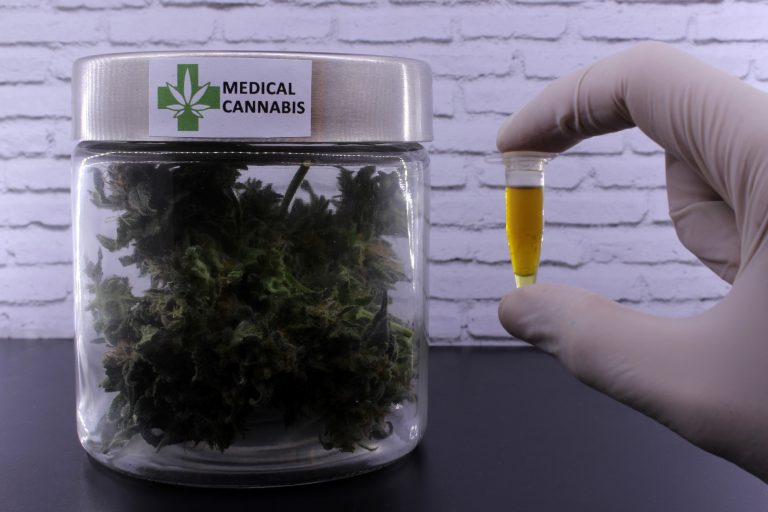 Saúde - remédios - maconha medicinal cannabis sativa