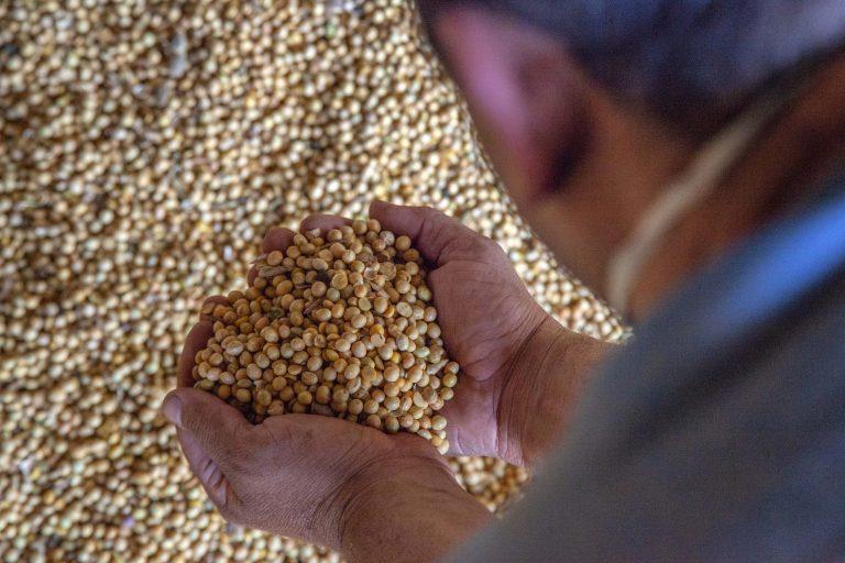 Alimentos - grãos soja exportação produção agrícola agricultura