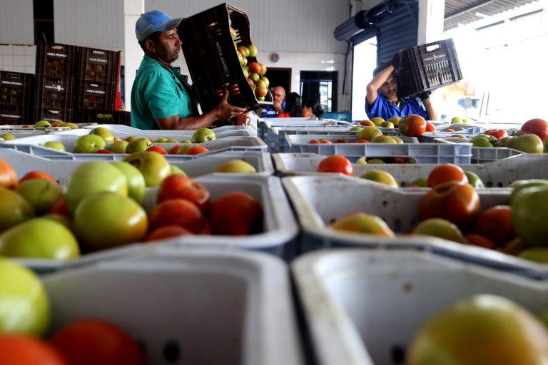 Alimentos - hortifrutigranjeiros tomates abastecimento produção agrícola (banco de alimento da Ceasa/Paraná)