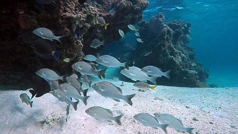 Meio Ambiente - animais e natureza - peixes vida marinha mergulho paraíso ecológico biodiversidade espécies (reserva biológica Atol das Rocas, litoral do Rio Grande do Norte)