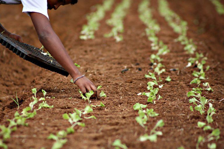 Agropecuária - plantações - agronegócio hortas plantios lavoura alimentos agricultura solo