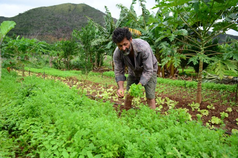 Agropecuária - plantações - agricultura familiar agricultor produtor rural
