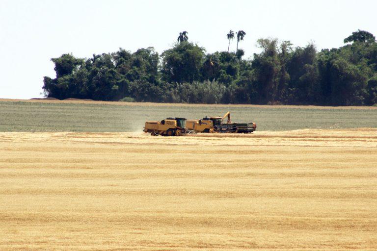 Agropecuária - plantações - lavouras tratores grãos produção agrícola código florestal meio ambiente preservação ambiental reserva legal área de proteção permanente