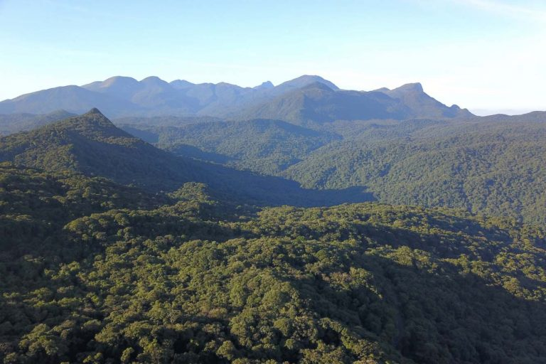 Meio Ambiente - parques e florestas - bioma Mata Atlântica nativa preservação ambiental remanescentes (Mata Atlântica na Serra do Mar, Paraná)