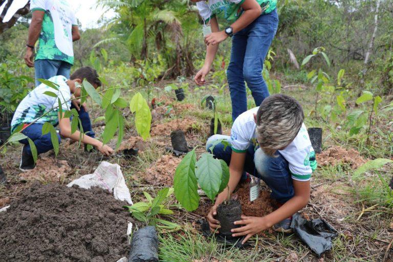 Meio Ambiente - queimada e desmatamento - reflorestamento replantio árvores mudas aquecimento global (Reflorestamento de área alterada no Parque do Utinga, Belém-PA)