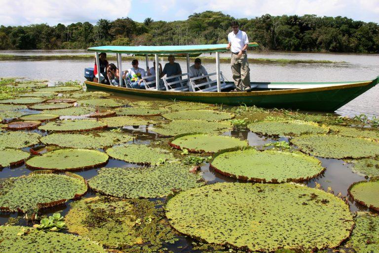 Transporte - barcos e portos - fluvial ribeirinhos Amazônia canoas vitória-régia