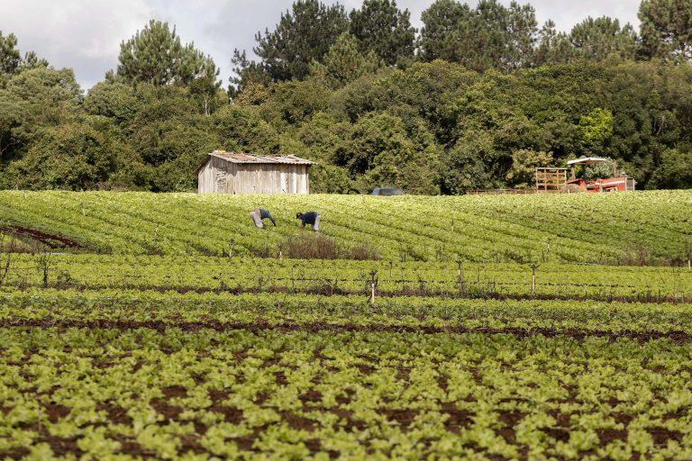 Agropecuária - plantações - agricultura familiar agricultores