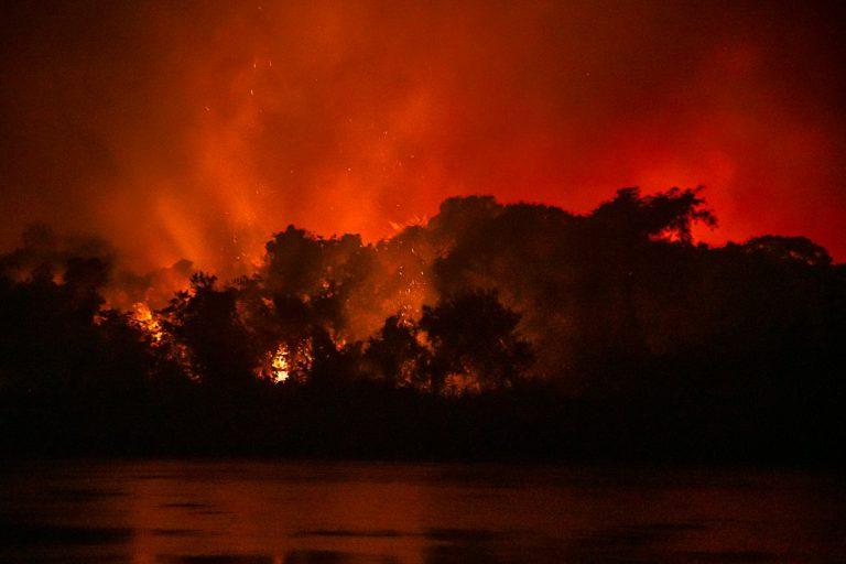 Meio Ambiente - queimada e desmatamento - Desastre ambiental provocado por queimadas no pantanal - animais feridos